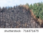 Burned Zone Next To Green Trees ...