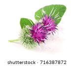 Burdock Flower Isolated On...