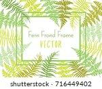 detailed bracken herbs drawing  ... | Shutterstock .eps vector #716449402