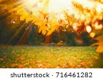autumn background with sunny... | Shutterstock . vector #716461282