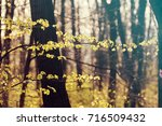 green forest in the spring ... | Shutterstock . vector #716509432