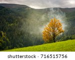 tree with yellow foliage in... | Shutterstock . vector #716515756