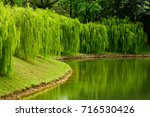 Willow Trees Beside A Fishing...