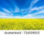 rape fields | Shutterstock . vector #716539015