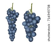 a bunch of fresh grapes on a... | Shutterstock .eps vector #716545738