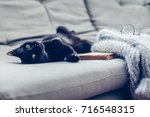 Stock photo lazy cat lying by warm woolen sweater and book on gray sofa winter or autumn cozy scene 716548315