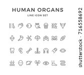 set line icons of human organs... | Shutterstock . vector #716558692