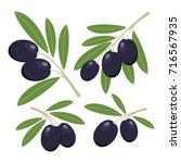 olives. set of dark olives with ...   Shutterstock .eps vector #716567935