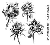 wild flowers roses isolated.... | Shutterstock .eps vector #716590336