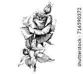 wild flowers roses isolated.... | Shutterstock .eps vector #716590372