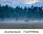 foggy forest with brown bear... | Shutterstock . vector #716599846