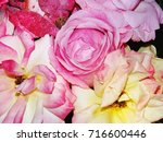 photo of some light pink roses...   Shutterstock . vector #716600446