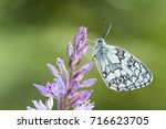 marble white butterfly | Shutterstock . vector #716623705
