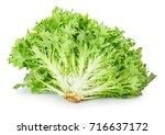 fresh green frisee lettuce... | Shutterstock . vector #716637172