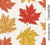 engraving autumn maple seamless ... | Shutterstock .eps vector #716648086