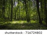 forest around the morasko... | Shutterstock . vector #716724802