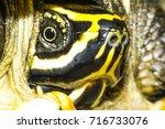 Turtle  Tortoise