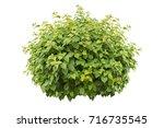 green bush isolated on white... | Shutterstock . vector #716735545
