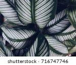 green leaf background texture ... | Shutterstock . vector #716747746