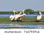 pelicans drying in the sun at... | Shutterstock . vector #716793916