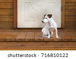 jack russell on the porch | Shutterstock . vector #716810122