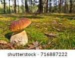 cep mushroom .boletus in the... | Shutterstock . vector #716887222