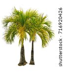 palm tree isolated white... | Shutterstock . vector #716920426