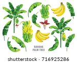 banana palm tree collection....
