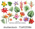 Stock vector tropical collection with exotic flowers and leaves vector design isolated elements on the white 716925586