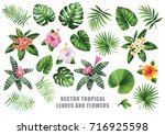 tropical collection with exotic ... | Shutterstock .eps vector #716925598
