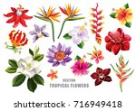 Stock vector tropical flowers collection vector isolated elements on the white background 716949418