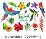 tropical collection  exotic... | Shutterstock .eps vector #716949442