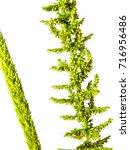 detail of freshness the new... | Shutterstock . vector #716956486