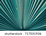 striped of palm leaf  abstract... | Shutterstock . vector #717031936