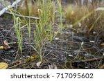 a few blades of grass in the...   Shutterstock . vector #717095602