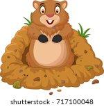 cartoon groundhog looking out...   Shutterstock . vector #717100048