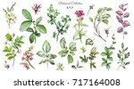 big set watercolor elements  ... | Shutterstock . vector #717164008