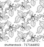 ink  pencil   the fruit  leaves ... | Shutterstock .eps vector #717166852