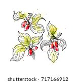 ink  pencil  watercolor  the... | Shutterstock .eps vector #717166912