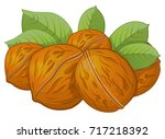 walnut cartoon vector... | Shutterstock .eps vector #717218392
