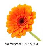 Beautiful Orange Gerbera ...