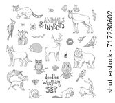 Doodles woodland set of animals and insects. Cute outlined mammals and birds. Moose, bear, fox, wolf, deer, owl, hare, squirrel, raccoon, nest, ladybug, hedgehog. Can be used for colouring books.