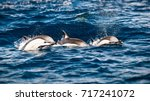 three beautiful striped... | Shutterstock . vector #717241072