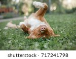 a funny dog is lying on the... | Shutterstock . vector #717241798