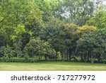 the green trees scenery in... | Shutterstock . vector #717277972