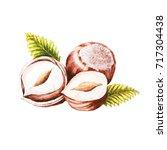 watercolor hazelnut isolated.... | Shutterstock . vector #717304438