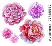 beautiful watercolor flower.... | Shutterstock . vector #717355582
