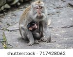 Monkeys Mom Mother Baby Pet...