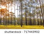 sunlight in the morning of the... | Shutterstock . vector #717443902