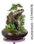 gardening tray damp in a pot ... | Shutterstock . vector #717444478
